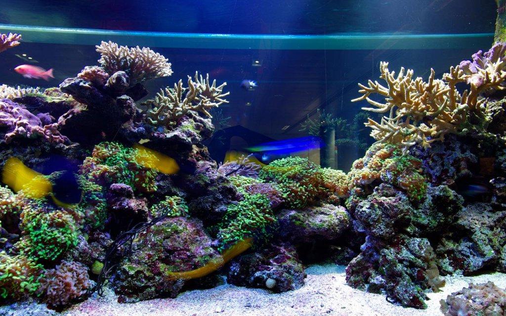 说明 让你的手机看起来像最美丽的水族世界!享受清澈的海水,海洋动物和珍奇鱼水族馆动态壁纸免费应用程序的Android的美。这些都是海下壁纸,你可以在市场上看到的最好的。现在,你终于可以有自己的鱼缸,你可以带着你无论你走到哪里。千万不要等太久,与现在最好的动画背景免费美化您的主屏幕! 欣赏美丽的海洋世界您的主屏幕,可以让你的一天美丽和你平静下来,如果你觉得紧张的。这个免费的动态壁纸集锦包括惊人的海洋鱼类壁纸和热带鱼背景,让您可以只要你想改变它们。选择异国情调的壁纸高清你最喜欢的,看如何不同大小开始气泡浮