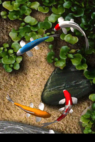Koi Fish Live Wallpaper ...
